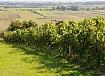 vinorodni okoliš Prekmurje