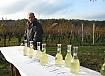 vina prekmurskih goric