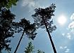 Gozd Prekmurje